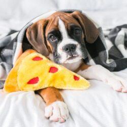 NomNomz Pizza 2