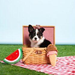 NomNomz Watermeloen